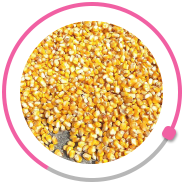 Specialized plant for the production of corn seeds фото 14 LNZ Group