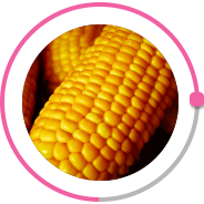 Specialized plant for the production of corn seeds фото 13 LNZ Group