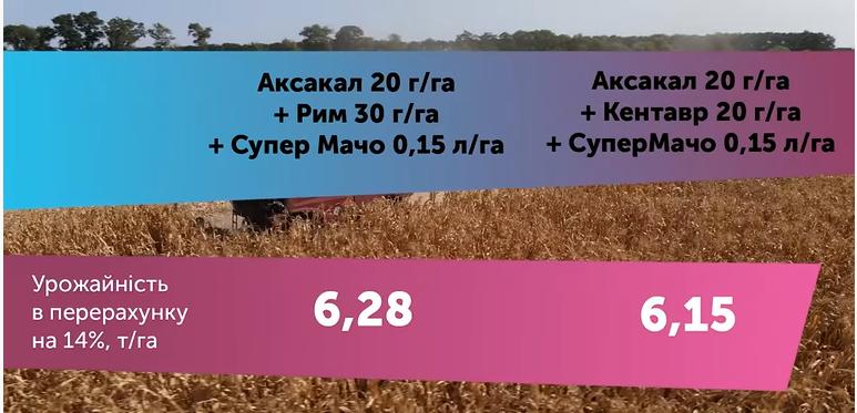 Результати дослідів 2020 гербіцидного захисту, технології сівби соняшнику, кукурудзи та пшениці фото 8 LNZ Group