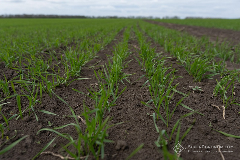 Типові регіональні проблеми захисту рослин, з якими зустрічаються аграрії у вирощуванні озимої пшениці фото 3 LNZ Group