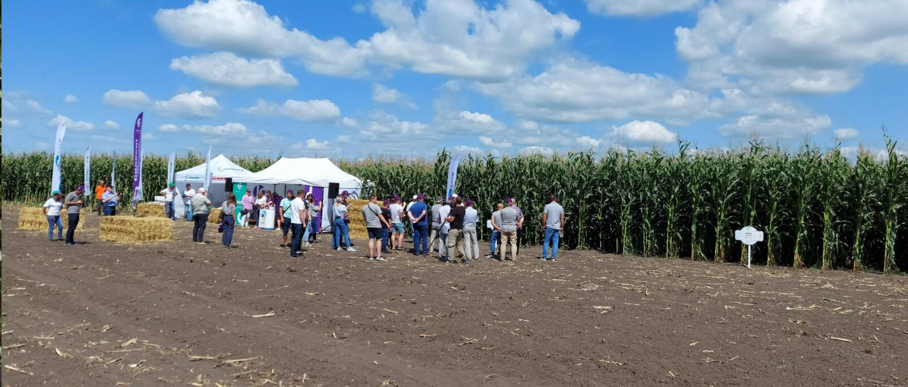 Не існує кукурудзи подвійних стандартів — ПРО ПЕРЕВАГИ СИЛОСНИХ ГІБРИДІВ UNIVERSEED фото 2 LNZ Group