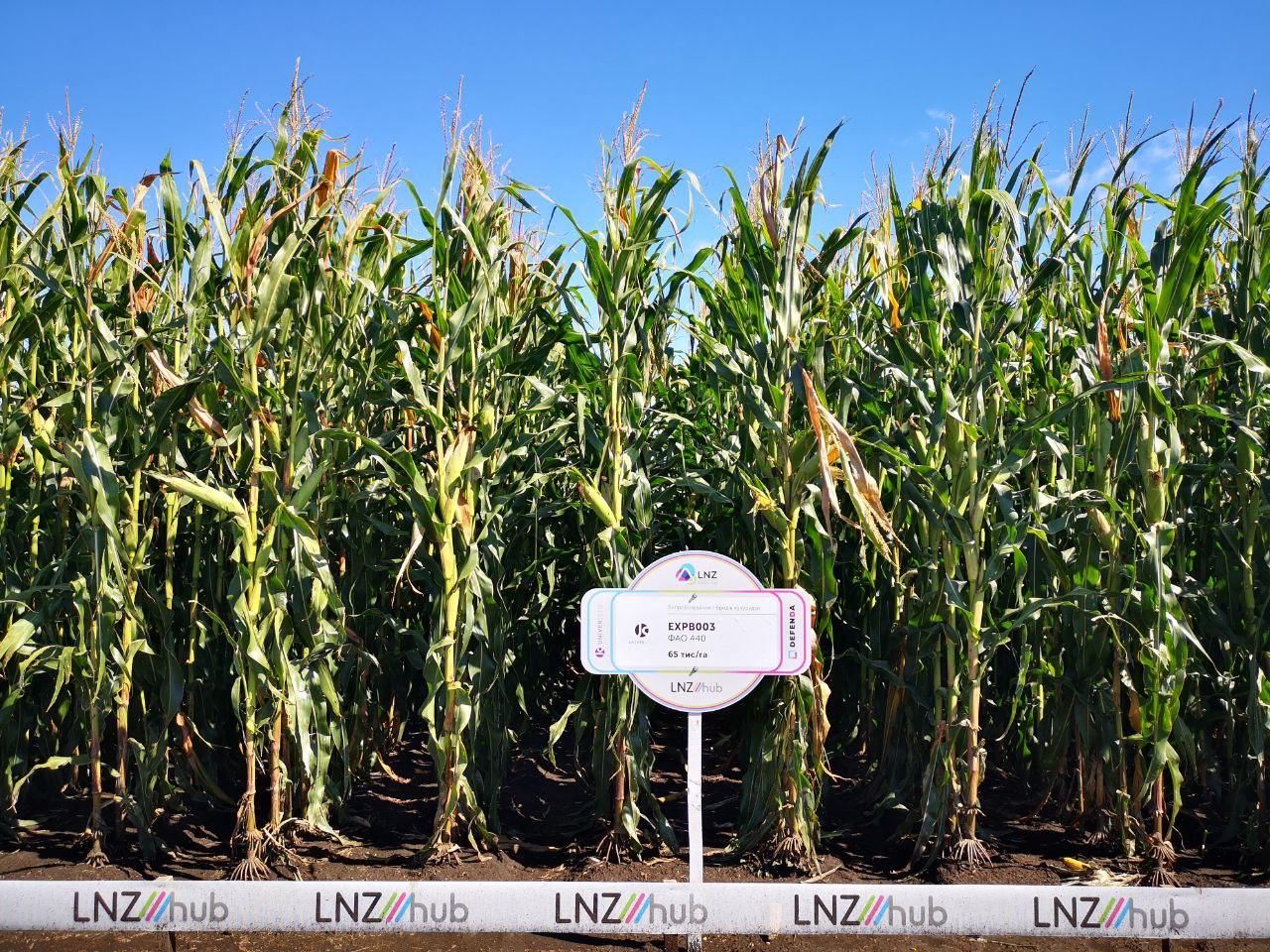 Стало відомо, який гібрид кукурудзи краще вирощувати на зрошенні фото 3 LNZ Group