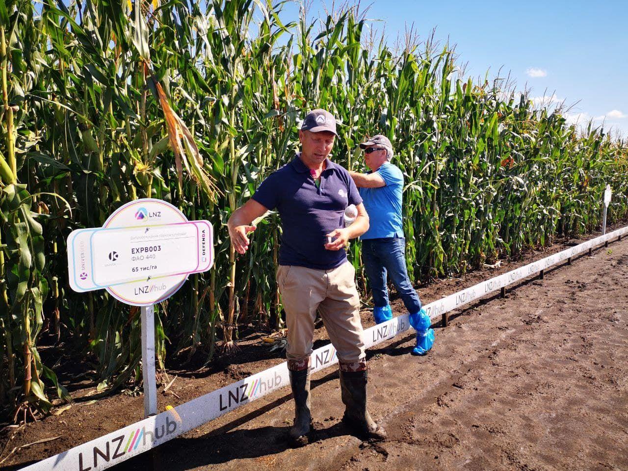 Стало відомо, який гібрид кукурудзи краще вирощувати на зрошенні фото 2 LNZ Group