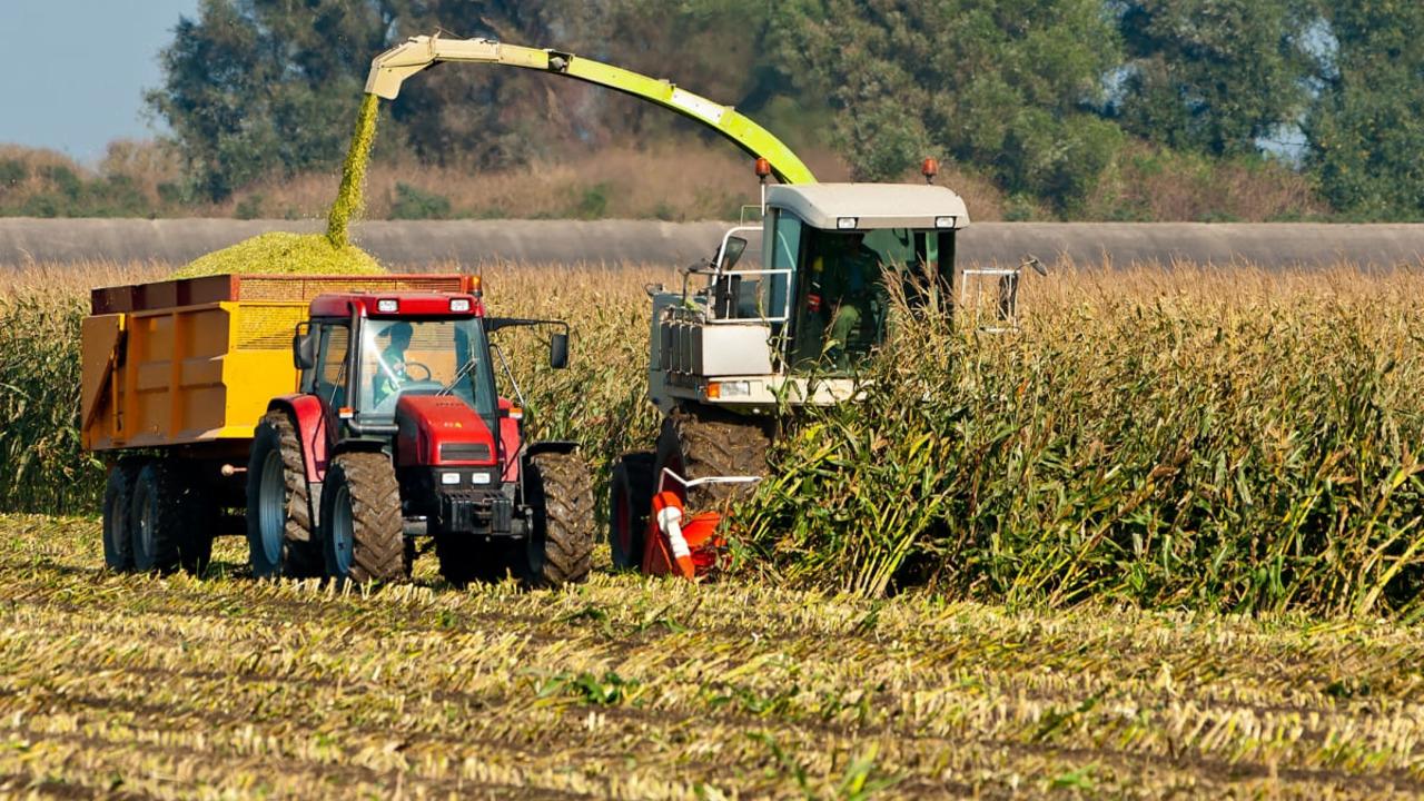 Кукурудза на силос — технологія вирощування та аспекти силосування фото 7 LNZ Group
