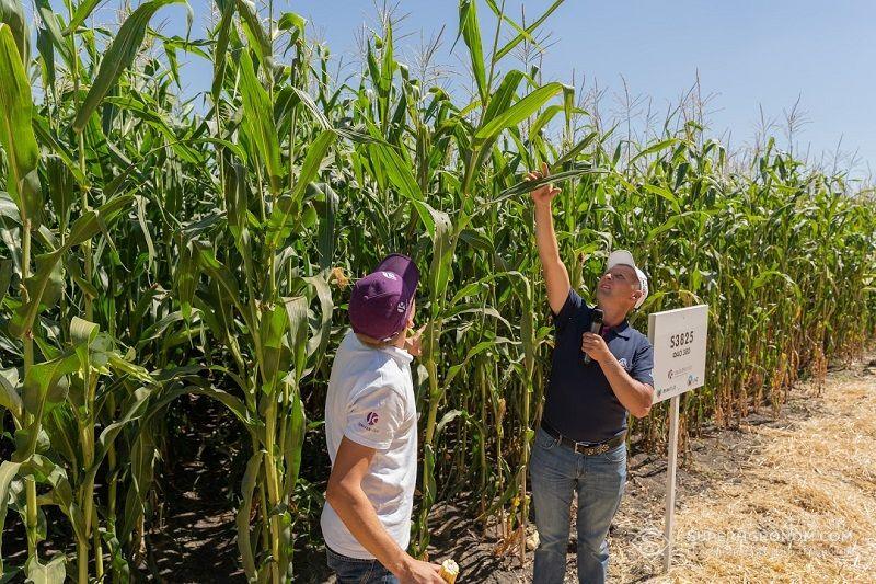 Леонід Чорний: Розумні підходи у вирощуванні соняшнику та кукурудзи в Центральному регіоні фото 3 LNZ Group