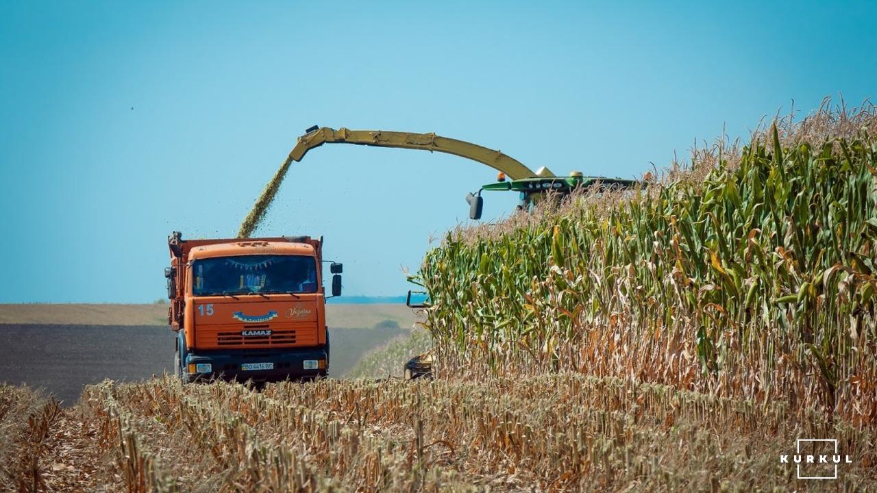 Кукурудза на силос — технологія вирощування та аспекти силосування фото 1 LNZ Group