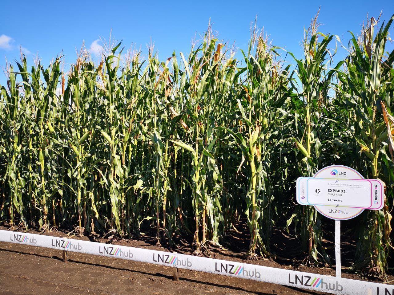 Стало відомо, який гібрид кукурудзи краще вирощувати на зрошенні фото 1 LNZ Group