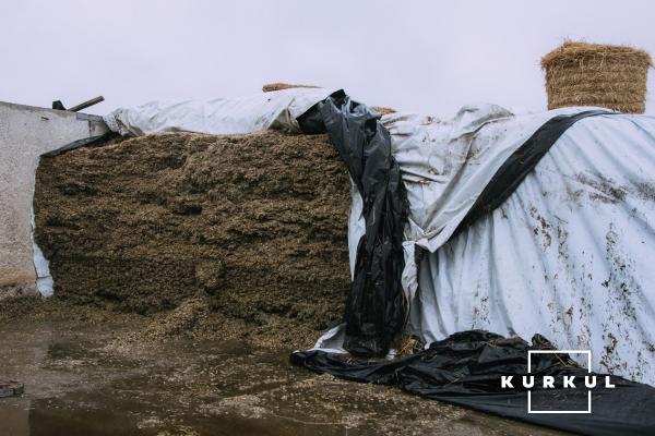 Кукурудза на силос — технологія вирощування та аспекти силосування фото 4 LNZ Group