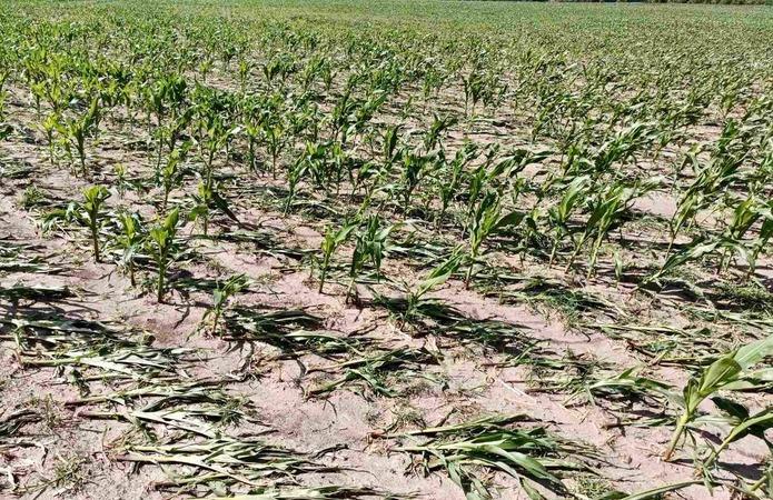 Проливні дощі пошкоджують врожай зернових в Україні фото 2 LNZ Group