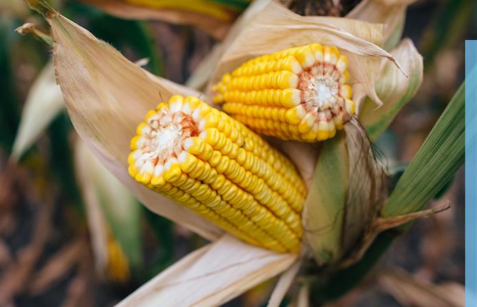 Стати радником для аграрія: Як бути ефективним в умовах зміни клімату та подорожчання ресурсів фото 6 LNZ Group