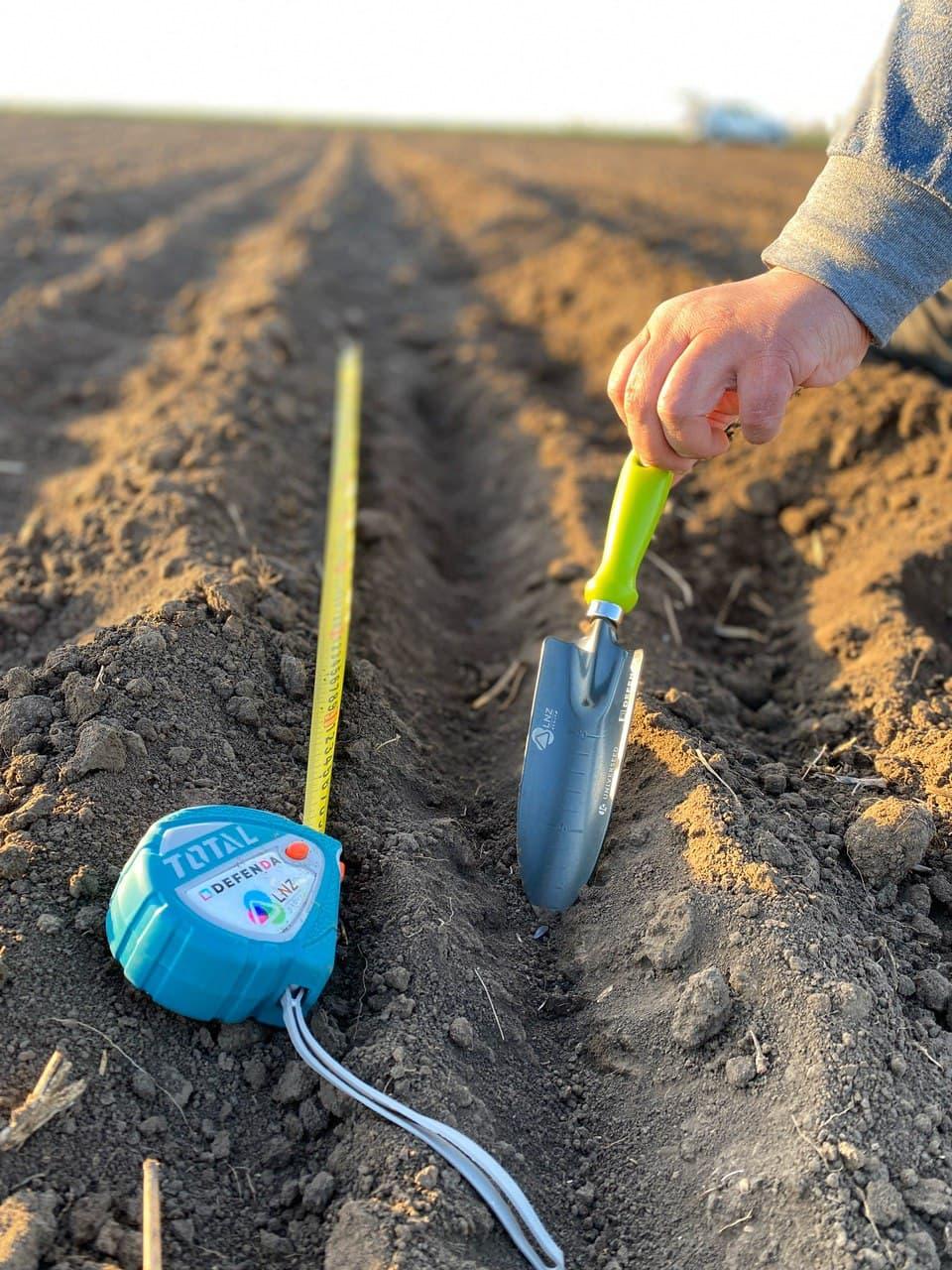 Олександр Котигора: Вплив строків та норм висіву на урожайність соняшнику фото 4 LNZ Group