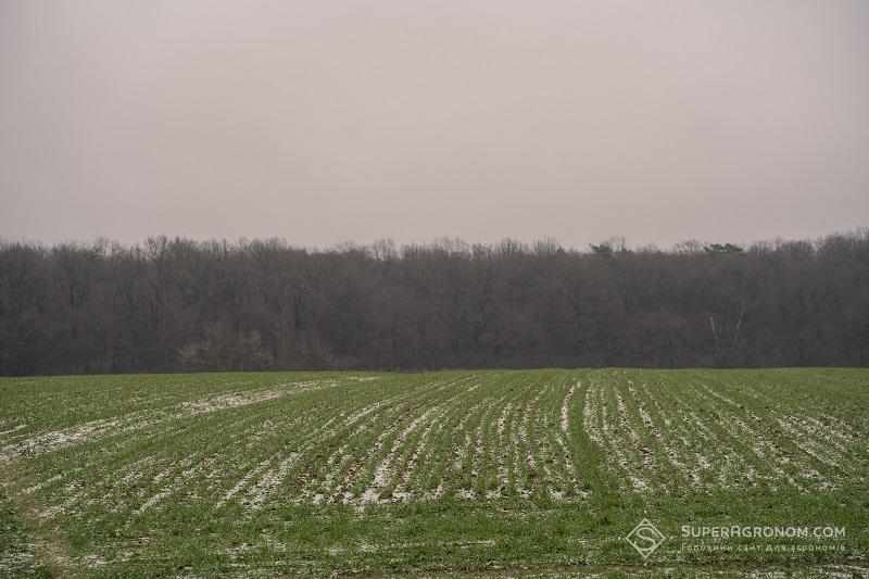 Озима пшениця на LNZ-хаб: особливості, досліди та врожайність фото 3 LNZ Group