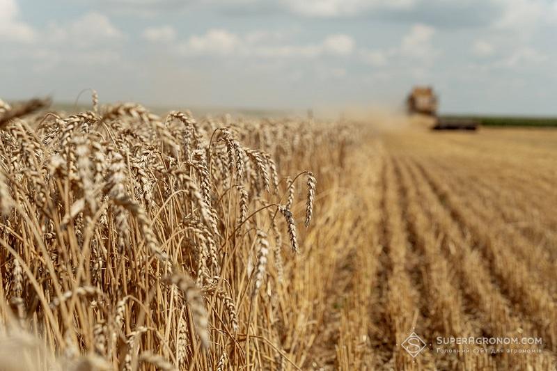 Озима пшениця на LNZ-хаб: особливості, досліди та врожайність фото 1 LNZ Group