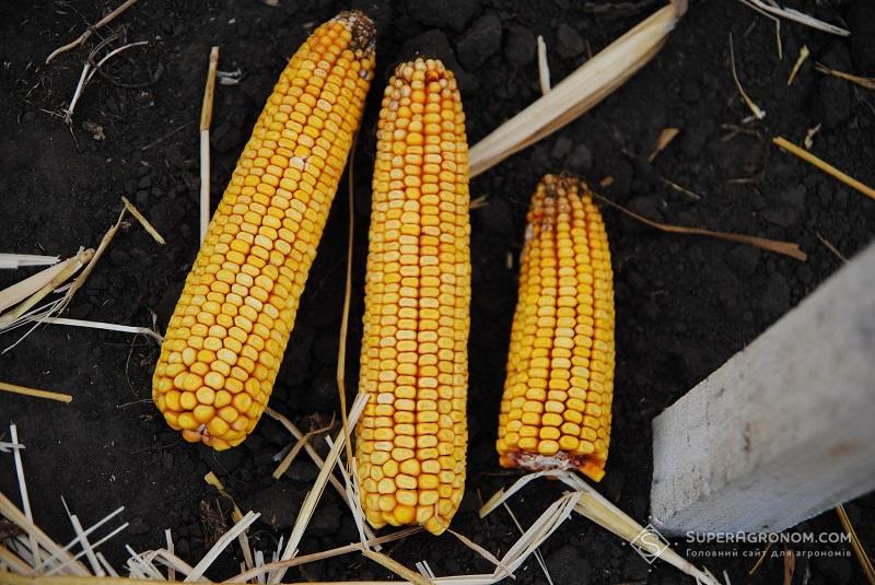 Правила розрахунку норм висіву кукурудзи в різних ґрунтово-кліматичних зонах фото 6 LNZ Group