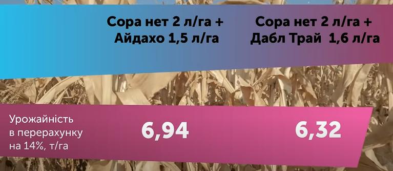Результати дослідів 2020 гербіцидного захисту, технології сівби соняшнику, кукурудзи та пшениці фото 7 LNZ Group