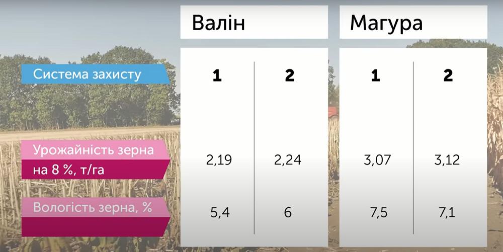 Результати дослідів 2020 гербіцидного захисту, технології сівби соняшнику, кукурудзи та пшениці фото 4 LNZ Group