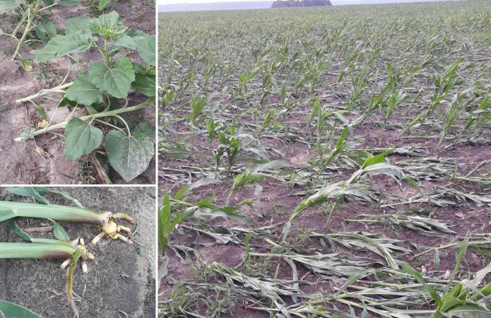 Проливні дощі пошкоджують врожай зернових в Україні фото 1 LNZ Group