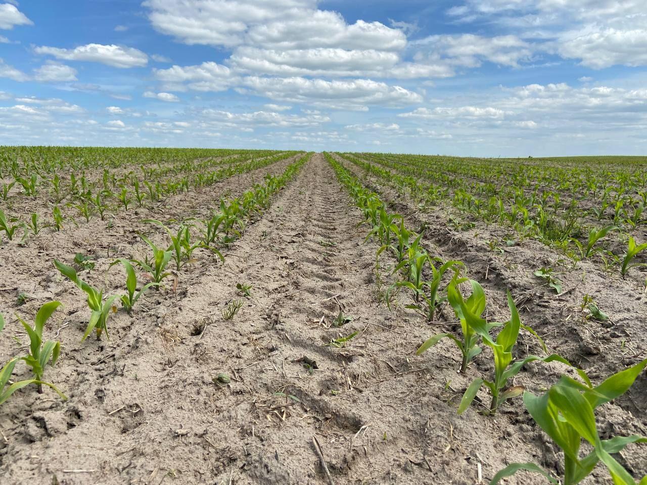 Досвід регіональних платформ Mini Hub для вирощування кукурудзи та соняшника фото 7 LNZ Group
