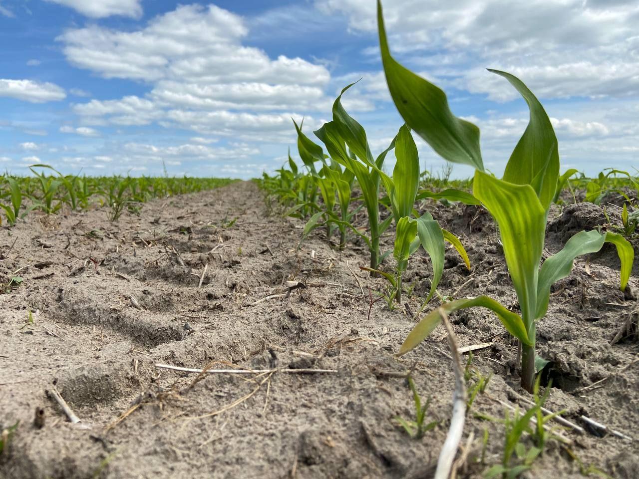 Досвід регіональних платформ Mini Hub для вирощування кукурудзи та соняшника фото 6 LNZ Group