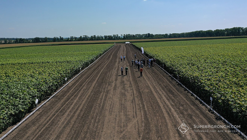 7 новинок гібридів соняшнику, стійких до посухи, хвороб та з високим потенціалом, — німецька селекція в Україні фото 2 LNZ Group