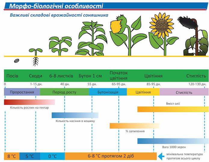 Особливості технології вирощування соняшнику фото 1 LNZ Group