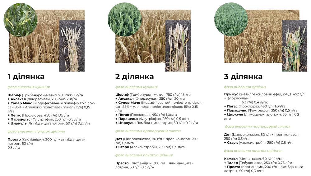 Результати дослідів 2020 гербіцидного захисту, технології сівби соняшнику, кукурудзи та пшениці фото 3 LNZ Group