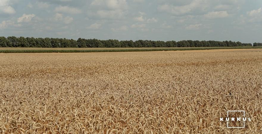 Віталій Красюк: Ціни на пшеницю повернуться до росту наприкінці року фото 2 LNZ Group