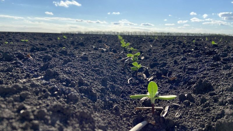 Досвід регіональних платформ Mini Hub для вирощування кукурудзи та соняшника фото 1 LNZ Group